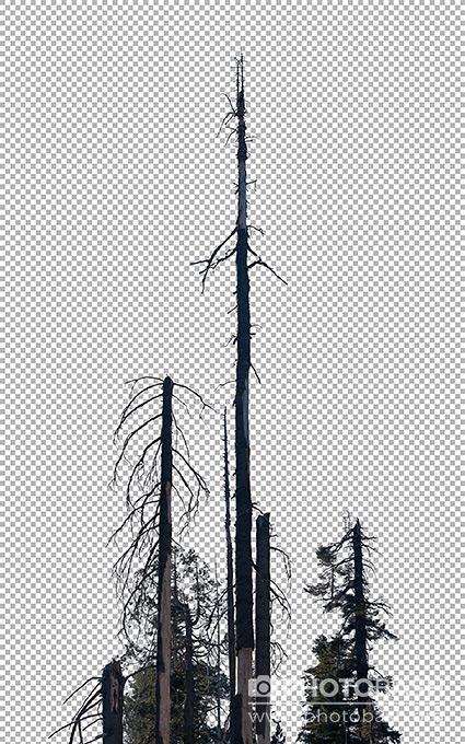 تصاویر رفرنس درختان مرده