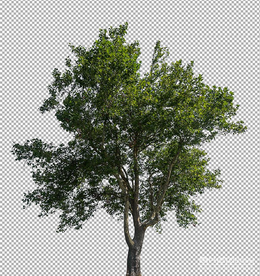 تصاویر رفرنس درختان برگریز