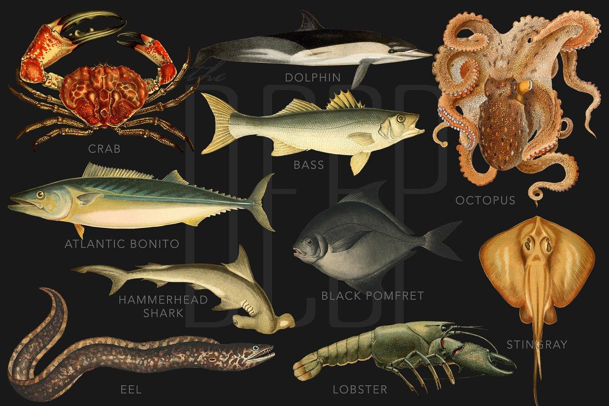 کلیپ آرت موجودات دریایی